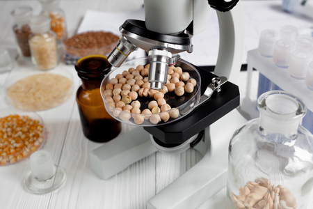 food inspection: concept healthy food inspection chick-pea in laboratory no one close up