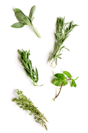 mint, sage, rosemary, thyme - tufts of herbs white background top view Stockfoto