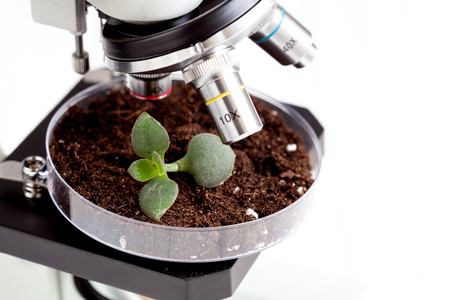 petri: analysis of soil sample with young plant under microscope in laboratory close up