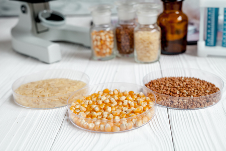 cereals in petri dish for analysis in laboratory with microscope wooden background no one close up