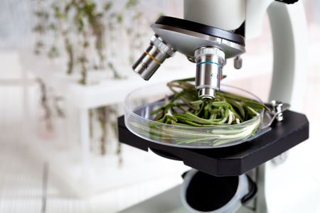analytic: test food herbs samples on microscope in laboratory