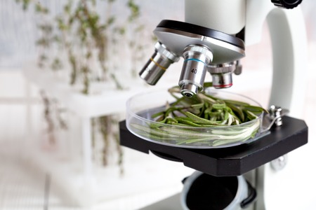 test food herbs samples on microscope in laboratory