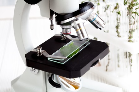 analytic: test plant samples on microscope slide in laboratory close up