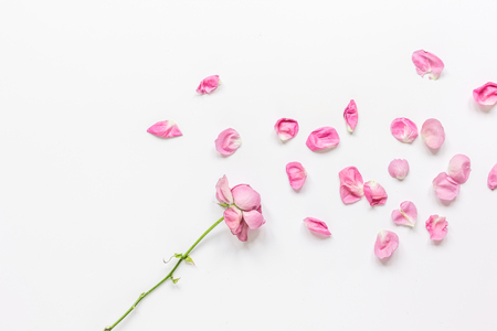 spring floral design with rose petals in soft light top view mock-up Stock Photo