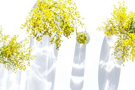 mimosa in glass vase on white background top view
