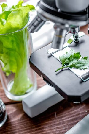 concept healthy food inspection herbs in laboratory Stock Photo