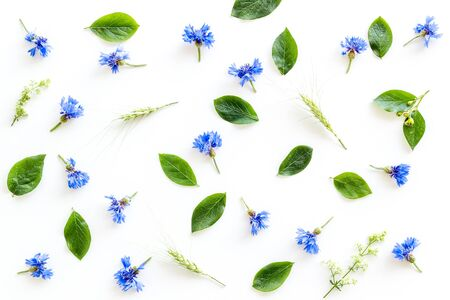 Summer. Field flowers design with blue cornflowers on white background top view pattern