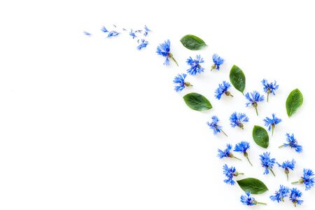 Field flowers design with blue cornflowers on white background top view mockup Reklamní fotografie