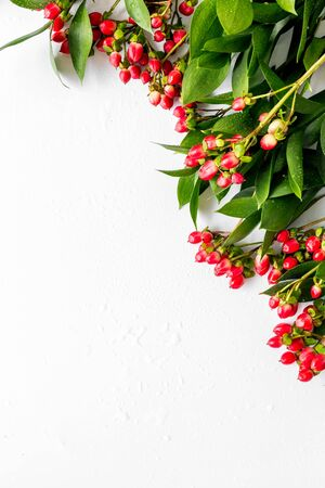 green herbs and red berries frame for summer design on white background top view mock up