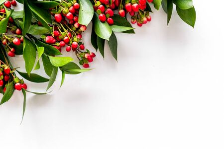 Background frame with green plant and berries frame on white background top view space for text Banque d'images