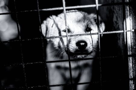abandoned sad and small dog behinde the cage