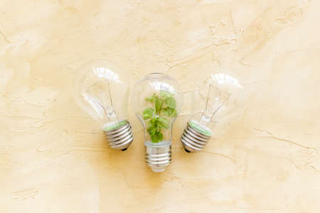 Lightbulb with plant - saving energy concept. Top view Archivio Fotografico