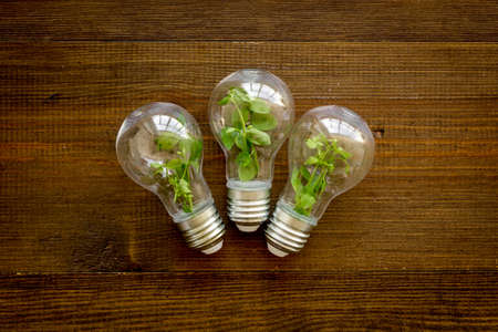 Green energy eco concept with grass in bulb, top view