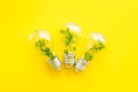 Energy saving light bulb with green plant inside, top view Archivio Fotografico
