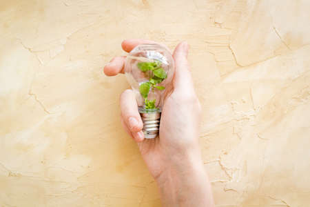 Hand holds light bulb with grass inside - green energy concept, top view Archivio Fotografico