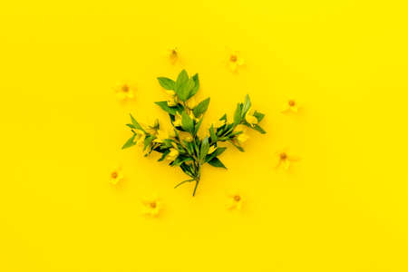 Floral background of yellow flowers with leaves, overhead view Stock fotó