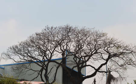 latent: Bare trees