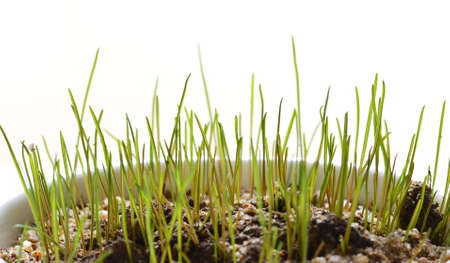 fescue: The grass that grows