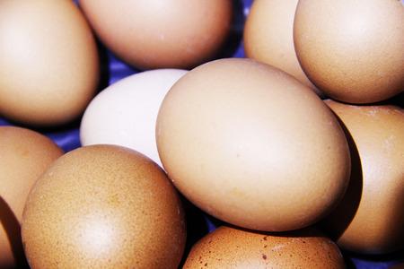 digest: Eggs