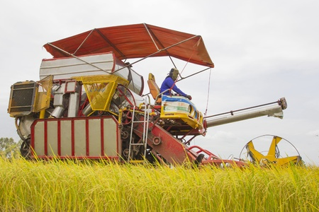 Combine Grain on farm during harvest at rice field Stock Photo - 16638855
