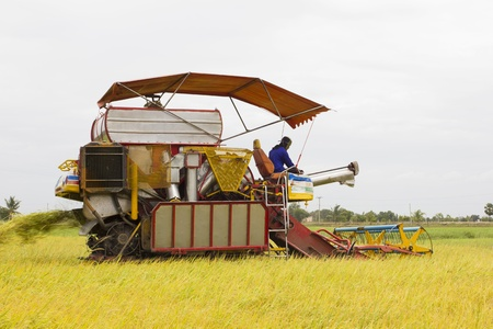 Combine Grain on farm during harvest at rice field Stock Photo - 16638821