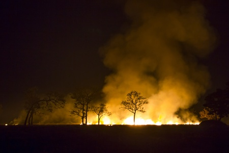 wildfire: Wildfire - Burning forest ecosystem is destroyed Stock Photo