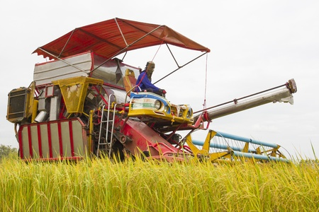 Combine Grain on farm during harvest at rice field photo