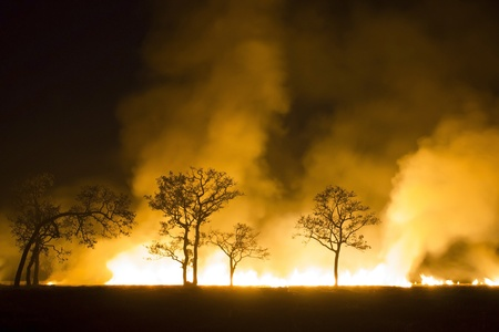 Wildfire - Burning forest ecosystem is destroyed Stock Photo