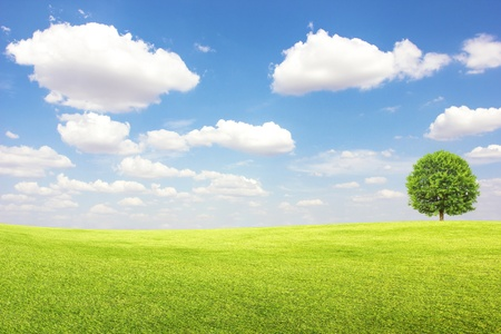 Green field and tree with blue sky clouds