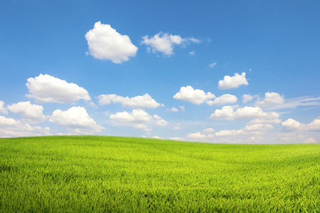 Green field with blue sky cloud Stock Photo