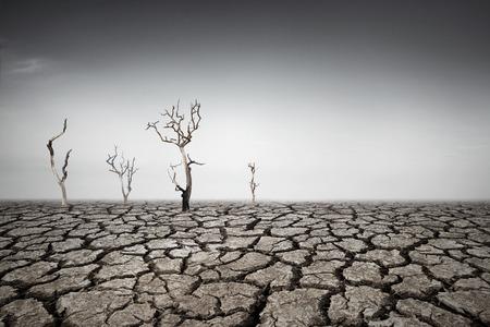 arboles secos: Tierra de sequ?a
