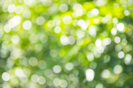 Abstract nature blurred background with bokeh