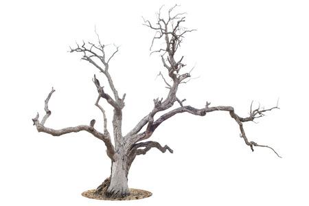 arbol raices: ?rbol muerto aislado en fondo blanco