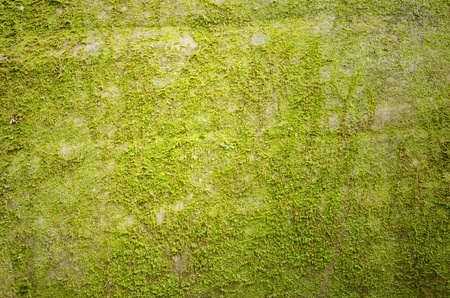 Background of green moss,   spring green moss background photo