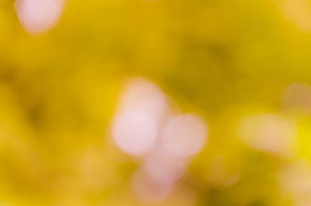 celebrat: Bokeh background from nature under tree shade Stock Photo