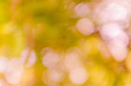 Bokeh background from nature under tree shade Stock Photo