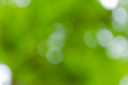 focus on background: Green bokeh out of focus background