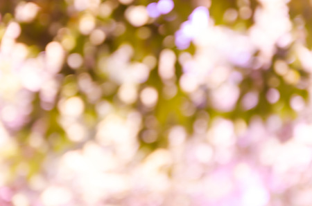 focus on background: Violet purple bokeh out of focus background from nature forest Stock Photo