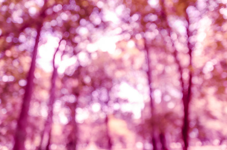 Canopies: Violet purple bokeh out of focus background from nature forest Stock Photo