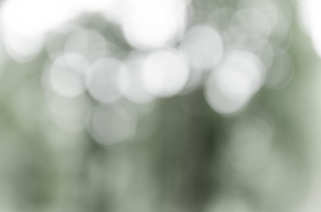 Gray bokeh out of focus background from nature forest