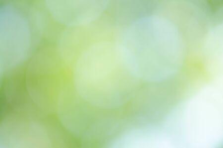 Green bokeh light background blur