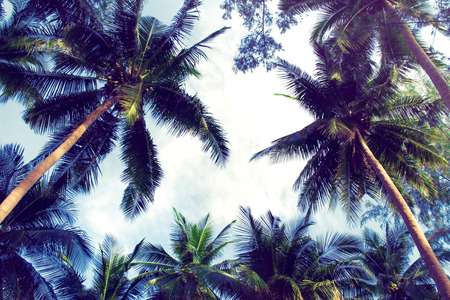 Blue cloudy sky through green palm trees. Vintage filter photo