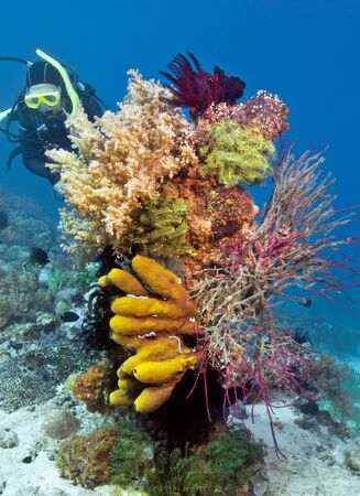Colorful variety of soft corals with a diver in the background . Underwater photography