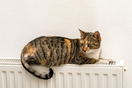 gatto domestico si distende su un termosifone caldo Archivio Fotografico