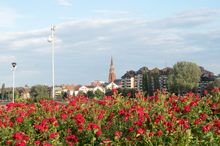 Osijek, Croatia view on church tower and skyscraper with red roses in foreground