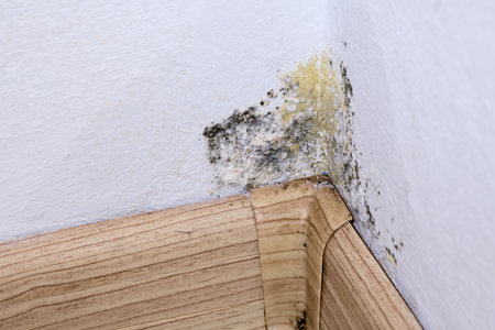 Black mold and moisture in the corner of room on white wall. Closeup macro. Stock Photo
