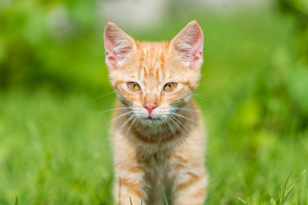 Portrait of cute kitten on grass. Shallow depth of filed.