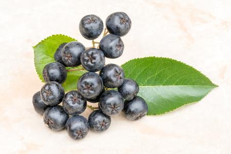 Ripe juicy Chokeberry or Aronia melanocarpa on ceramic background. Organic and vegetarian food full of vitamin and antioxidant.
