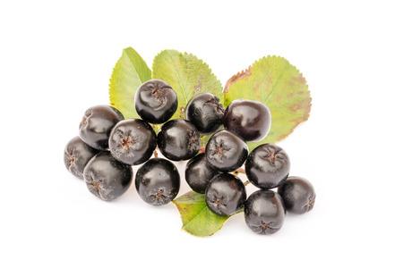 Chokeberry isolated on white background. Aronia melanocarpa. 版權商用圖片