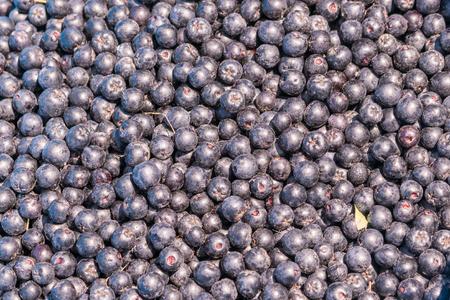 Fresh ripe chokeberry background (Aronia melanocarpa).